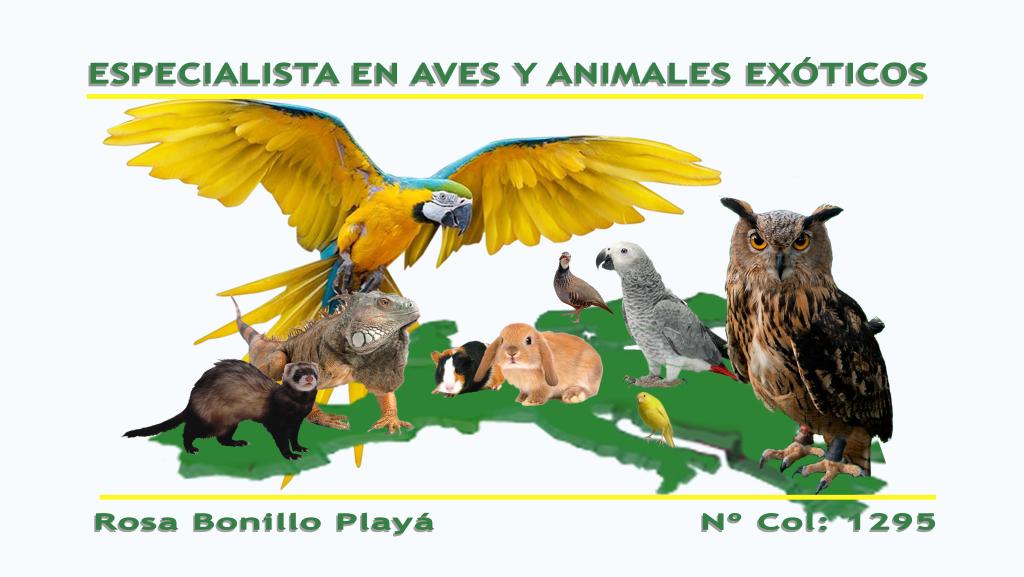Veterinaria especialista en aves y animales exoticos