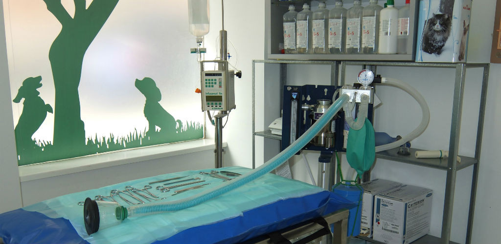 cirugia-veterinaria