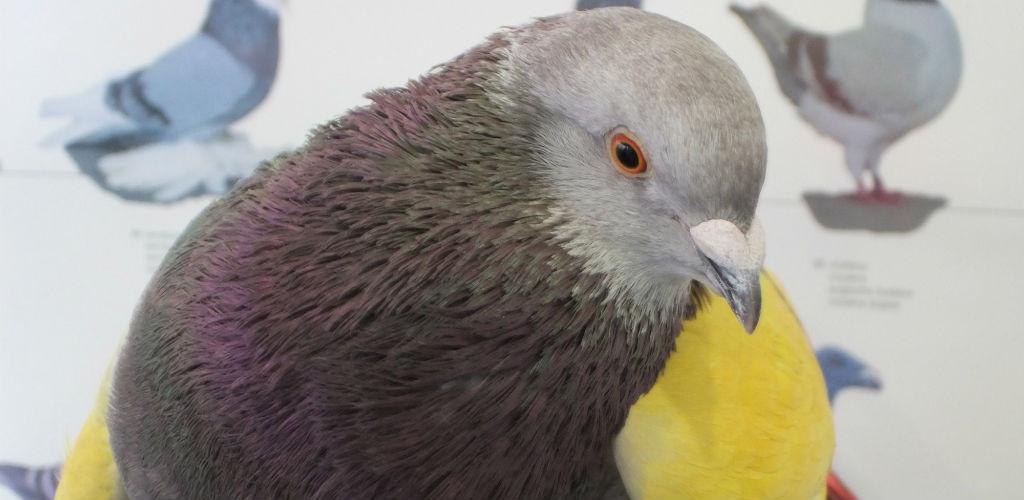 consulta-aves-animales-exoticos-2