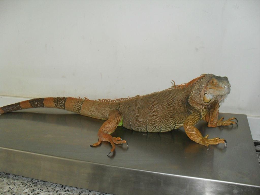paciente-reptil