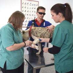 pacientes-perro