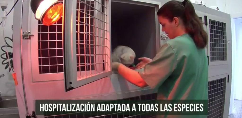 hospitalizacion-veterinaria-1