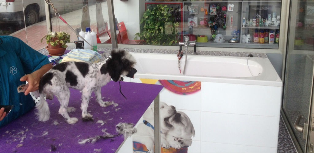 peluqueria-higiene-mascotas